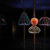 Elaine Yan Ling Ng  'Sundew' for Swarovski Designers of the Future